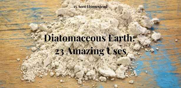 diatomaceous earth featured image