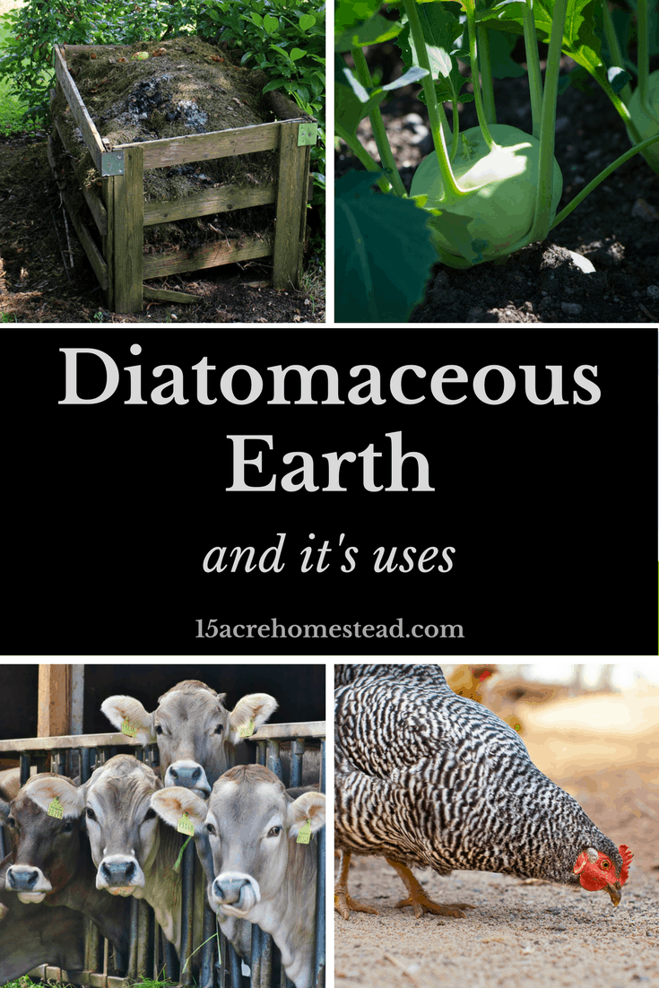 Diatomaceous earth is healthy for you and the environment! Learn how it can be used around the homestead!