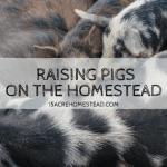 Raising Pigs on the Homestead