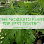 The Mosquito Plant for Pest Control