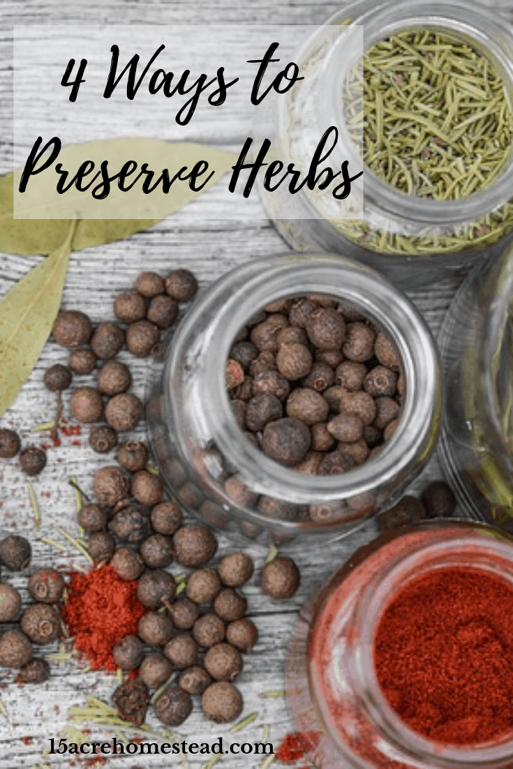 Learning to preserve herbs on your homestead can help you build a great spice cabinet and allow you to enjoy your harvest longer.