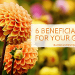6 beneficial bugs for your homestead