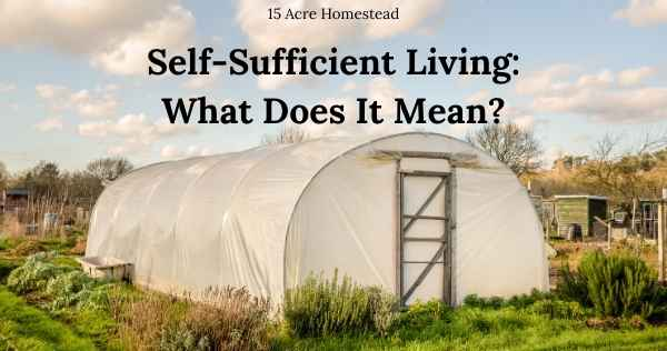self sufficient living featured image