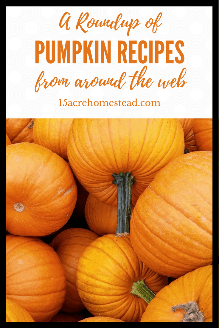 A roundup of pumpkin recipes from around the web.