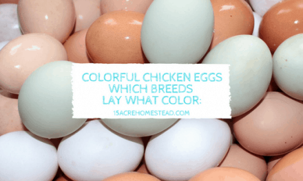 Colorful Chicken Eggs: Which Breeds Lay What Color