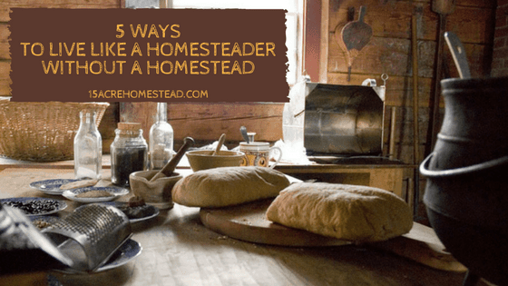Learn 5 ways you can live like a homesteader without a homestead.