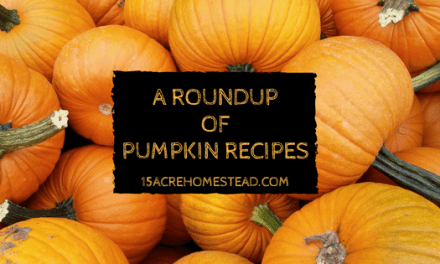 A Roundup of Pumpkin Recipes
