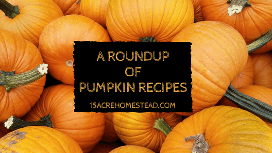 Roundup of pumpkin recipes from around the web.