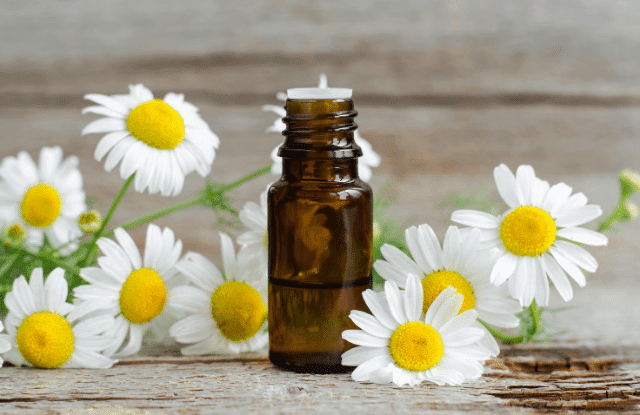 chamomile oil and flowers