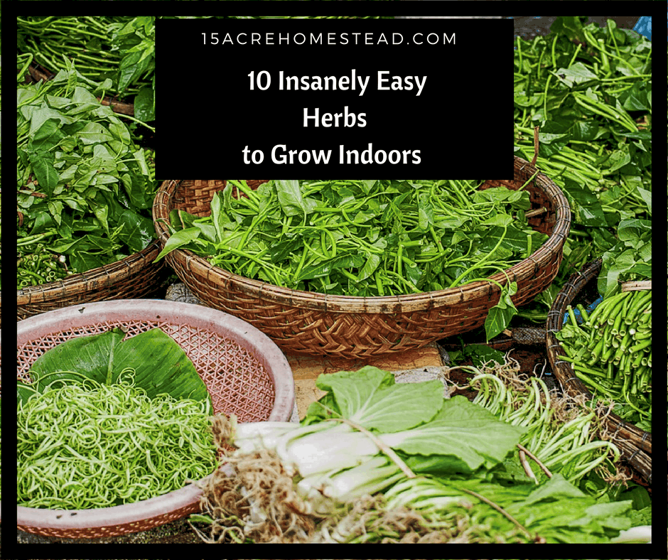 10 insanely easy herbs to grow indoors 15 acre homestead - Best herbs to grow indoors ...