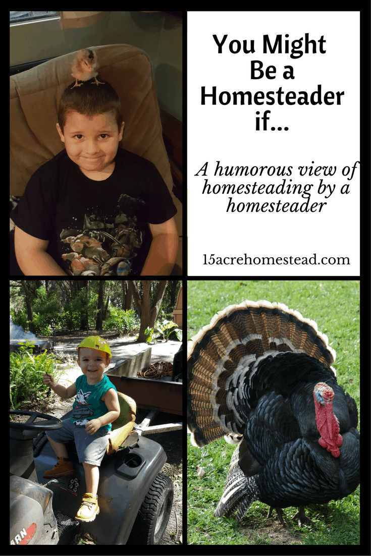 You might be a homesteader if... A humorous view of homesteading from a homesteader. (