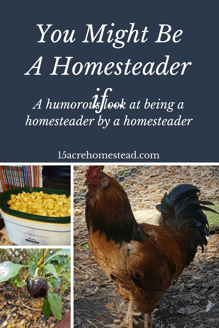 A humorous view of homesteading from a homesteader. You might be a homesteader if...