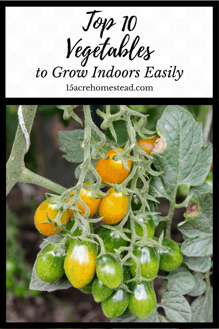 Growing vegetables is not just for outside gardens anymore. Many vegetables can be grown indoors under the right conditions.