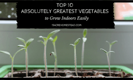 Top 10 Absolutely Greatest Vegetables to Grow Indoors Easily