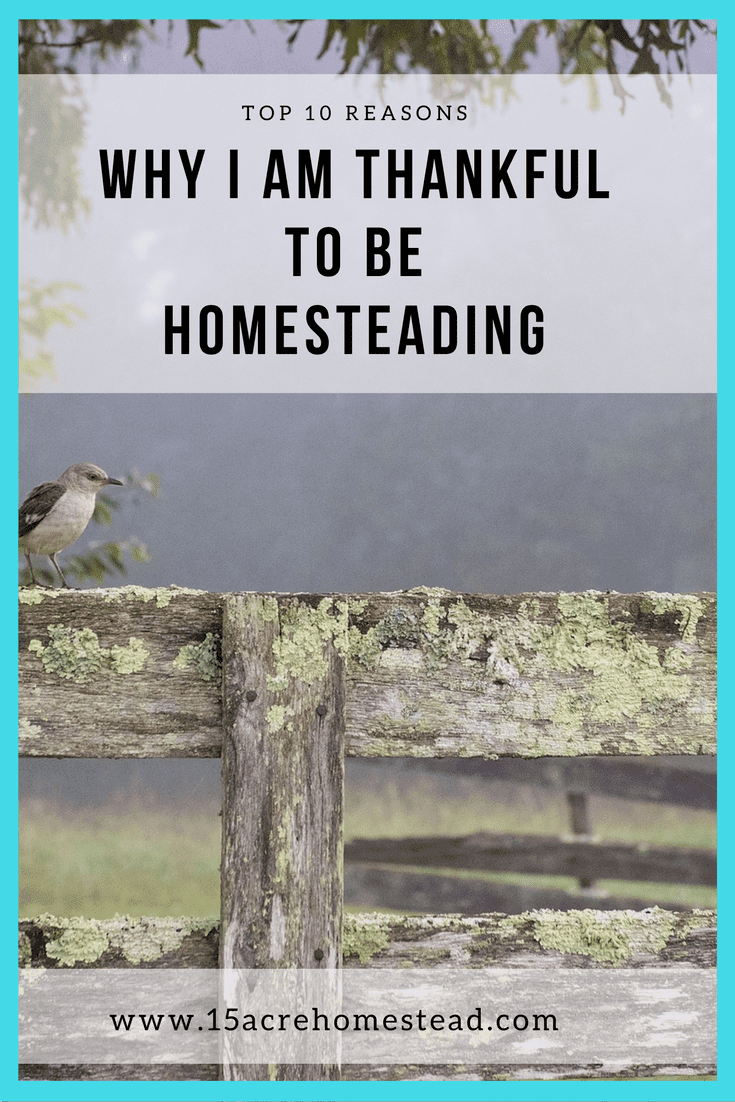Self sufficiency, independence and respect for life and nature are just a few of the reasons I am thankful to be homesteading.