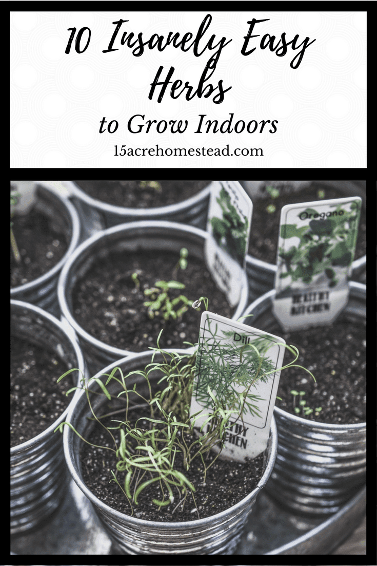 10 Insanely Easy Herbs To Grow Indoors 15 Acre Homestead