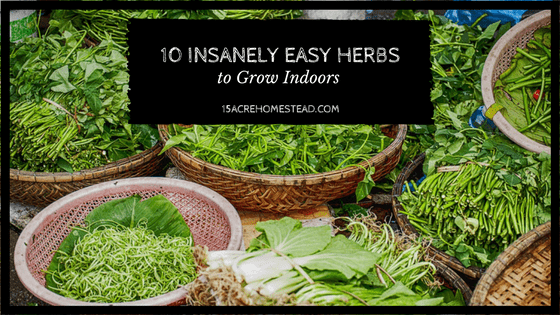 These 10 easy herbs to grow indoors can provide a year round harvest with minimal maintenance.