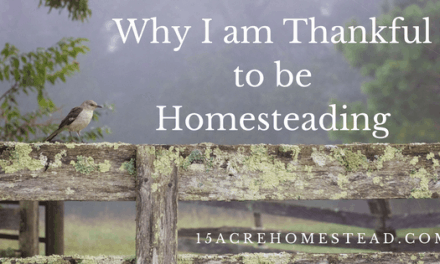 Why I Am Thankful To Be Homesteading