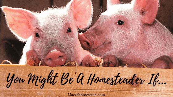 you might be a homesteader if