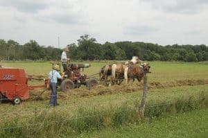 you might be a homesteader if: image of working in fiels
