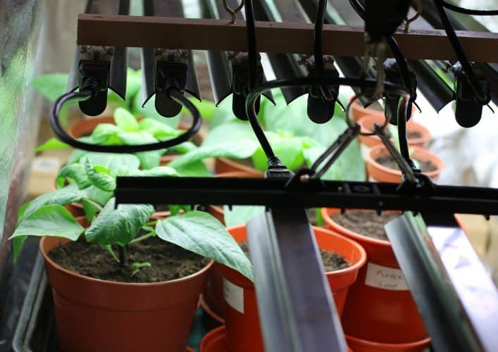 Peppers and many other vegetables can be grown indoors easily year round.