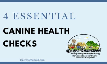 Four Essential Canine Health Checks
