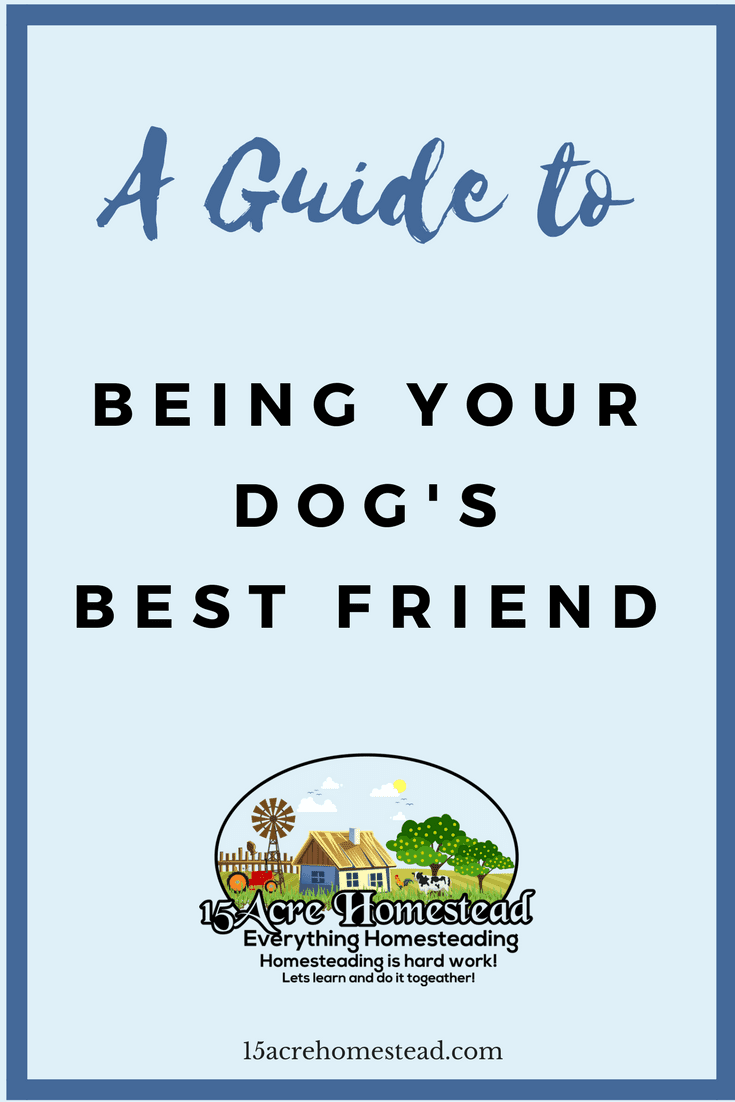 A simple guide to being your do'g best friend.