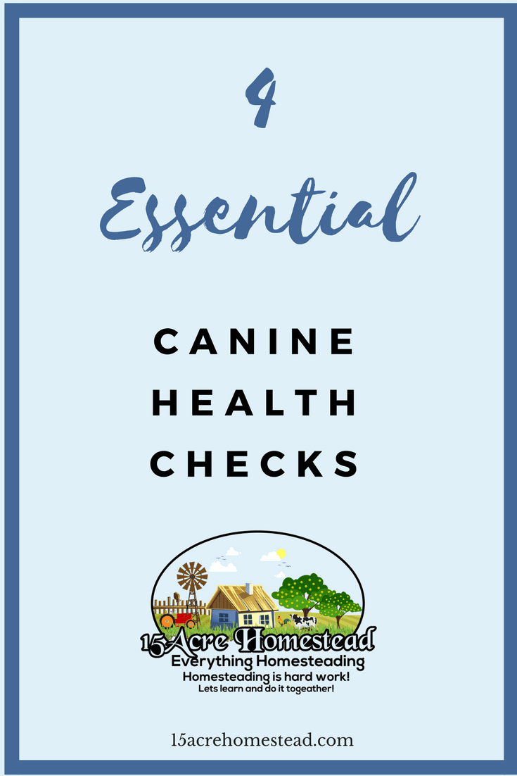 By doing these four essential canine health checks you can ensure having a healthy pup.