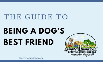 The Guide to Being a Dog's Best Friend