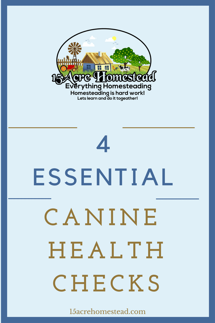 There are 4 essential canine health checks you should routinely do for your dogs.