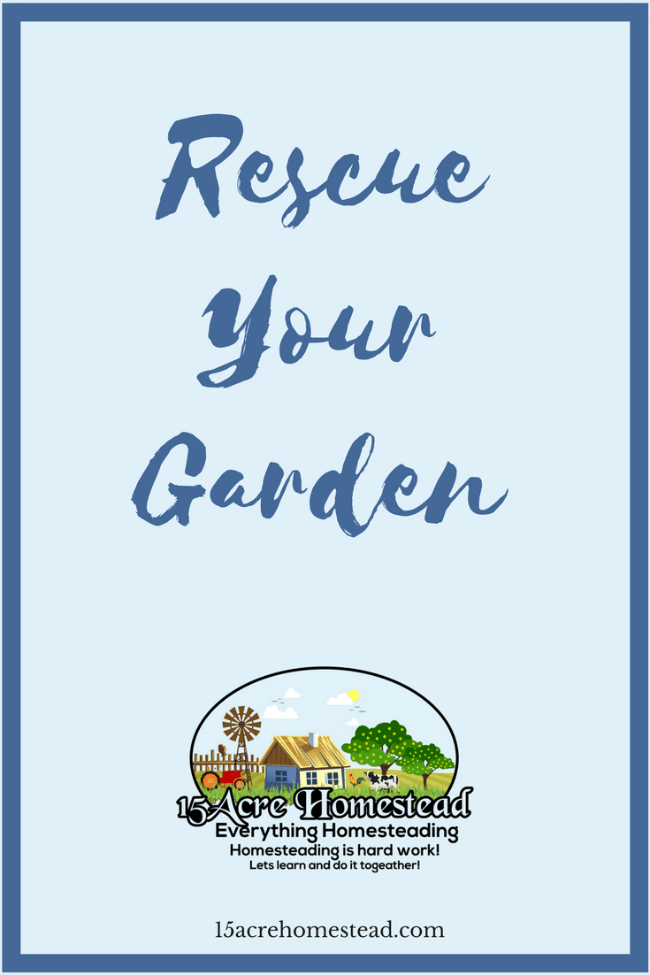 There are many ways you can rescue your garden after the cold wintry damages.