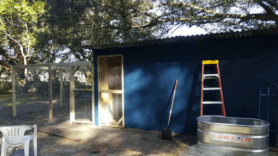 My chicken coop made from recycled materials. Proof that you can homestead with absolutely no money.
