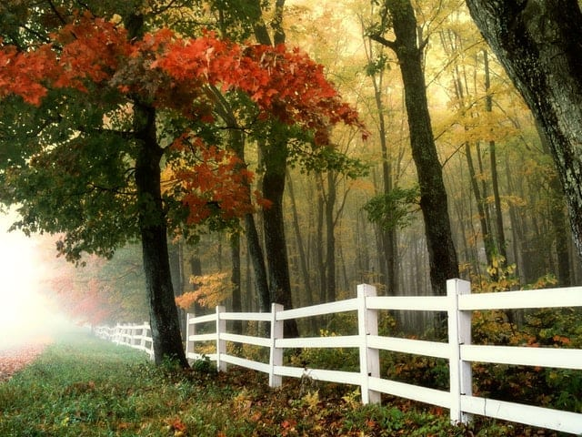 Improving the look of your homestead by repairing fencing often.