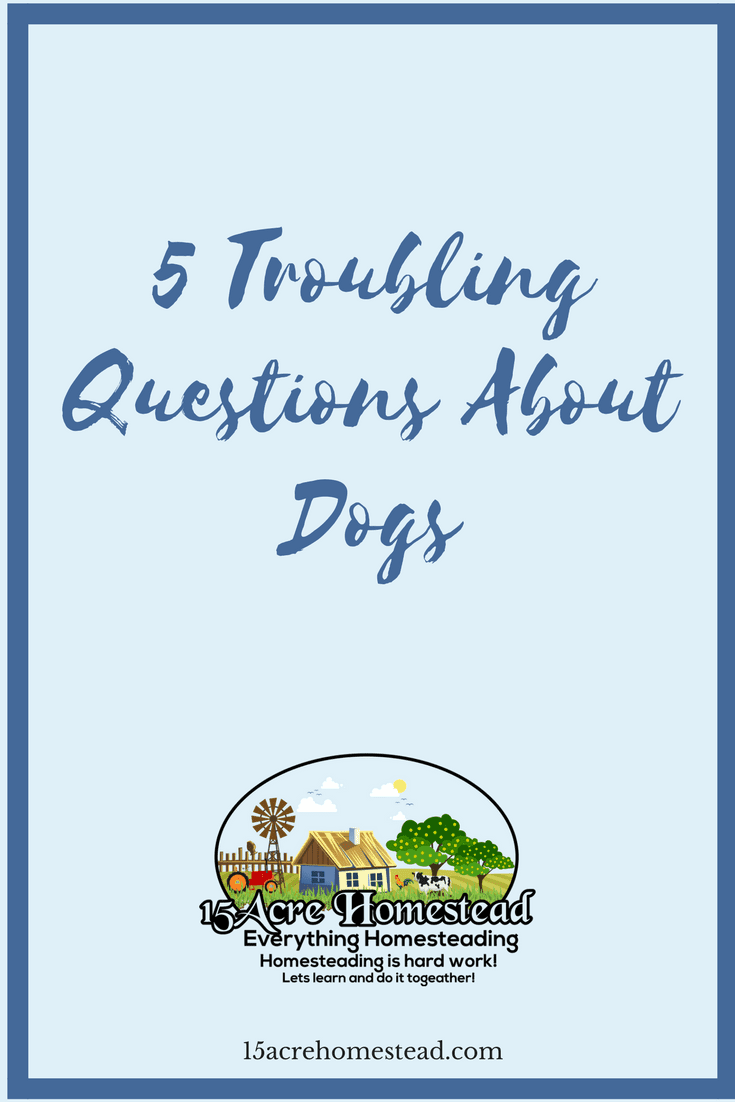 All pet owners ask questions about dogs. Here are 5 easy and simple answers to the most common ones.