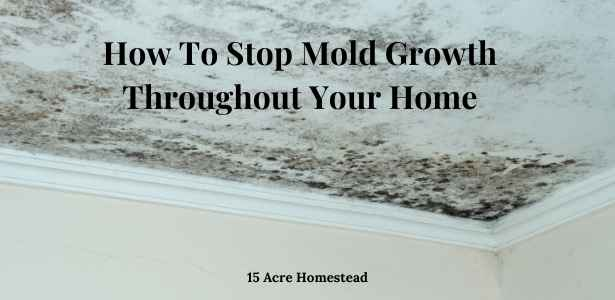 Stop mold growth featured image