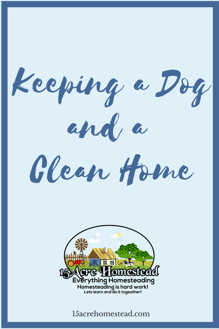 It is absolutely possible to keep a dog and have a clean home.