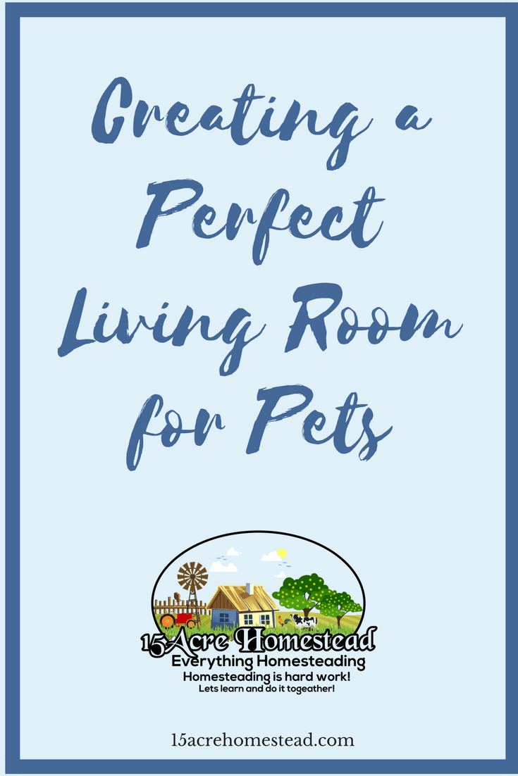 Tips and tricks when creating the perfect living room for your pets.