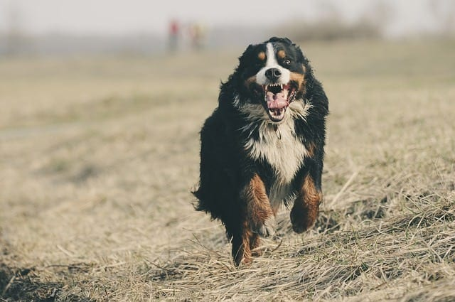 questions about dogs