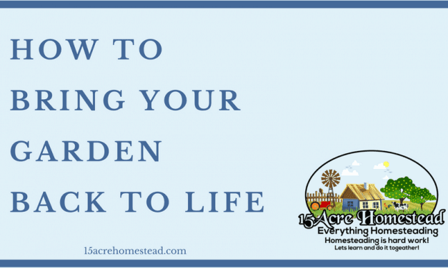 How To Bring Your Garden Back To Life