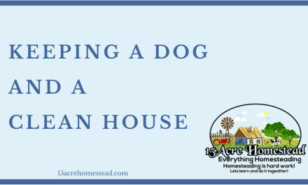 Keeping a Dog and a Clean Home