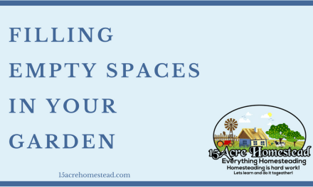 Filling Empty Spaces in Your Garden