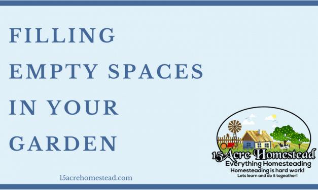 Filling Empty Spaces in Your Garden