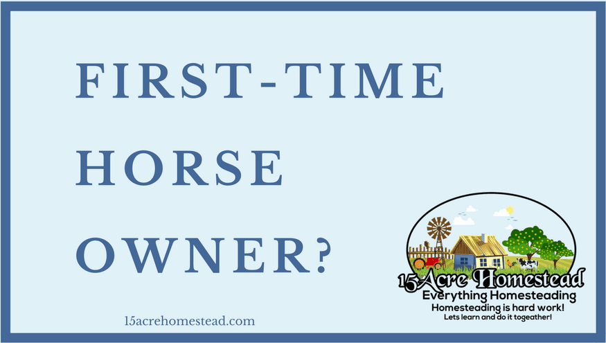 first-time horse owner