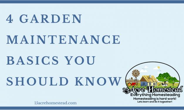 4 Garden Maintenance Basics You Should Know