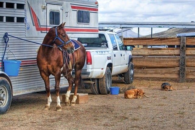 new homesteader- pick up truck