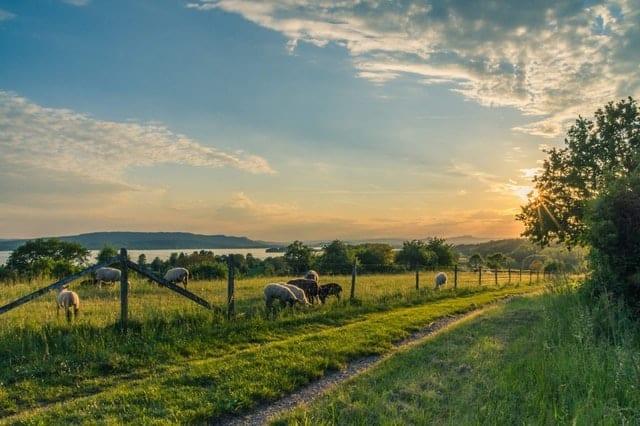 homesteading business-livestock