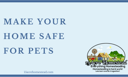 Making Your Home Safe For Pets