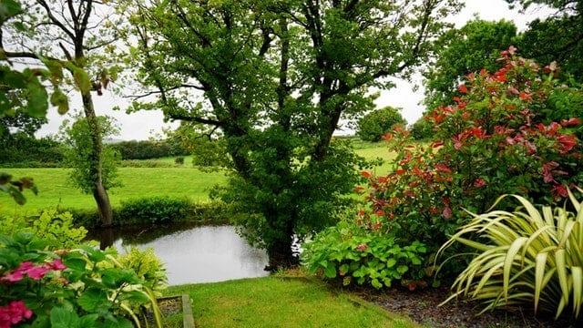 garden maintenance basics- clean area