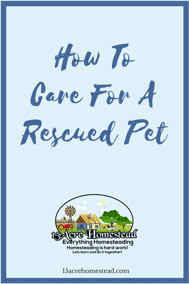 Here are some simple tips for caring for a rescued pet.