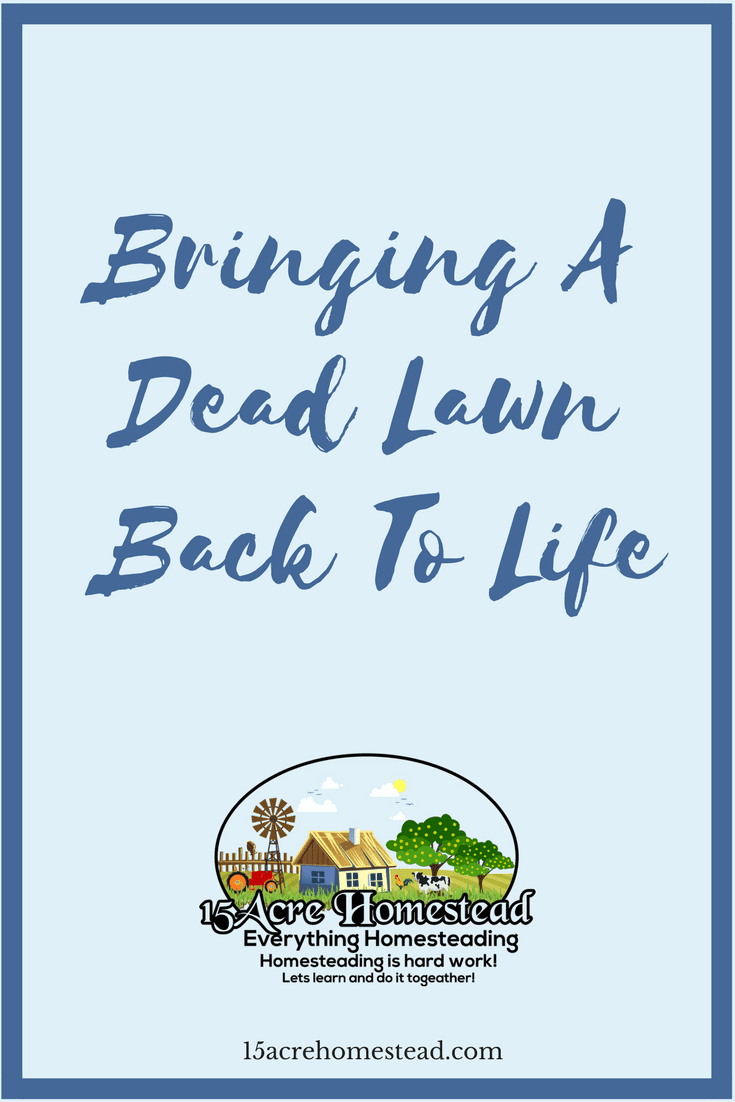Sometimes we have issues with our lawns that cause us to have to start over. Try these steps first to bring your dead lawn back to life.